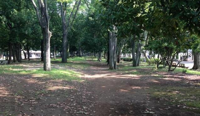 光が丘公園クロカンコース