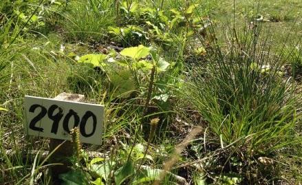 ブナの森クロカンコース 距離表示