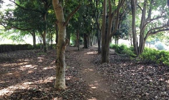 木陰のクロカンコース